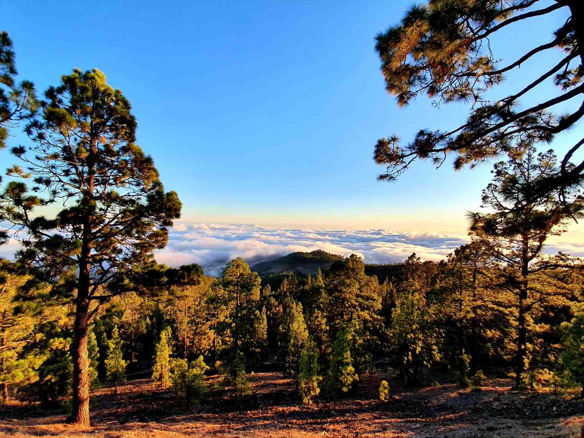 Teide Naturschutzgebiet Teneriffa